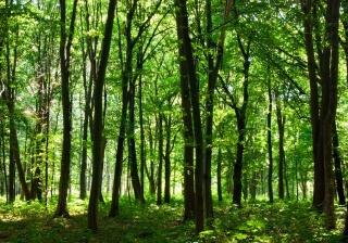 英語初心者の森